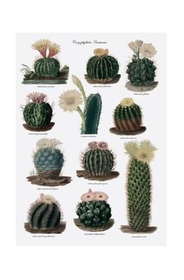 Cubic Botanical Tea Towel Cactus