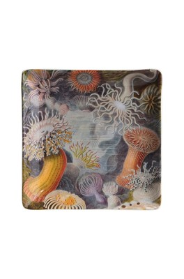 Cubic Haeckel Trinket Tray Small Sealife