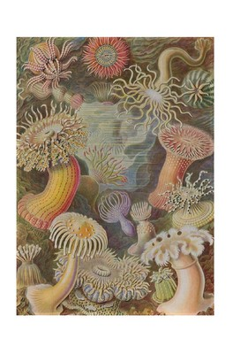 Cubic Haeckel Tea Towel- Sealife