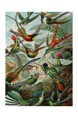 Cubic Theedoek met mooie print van Haeckel