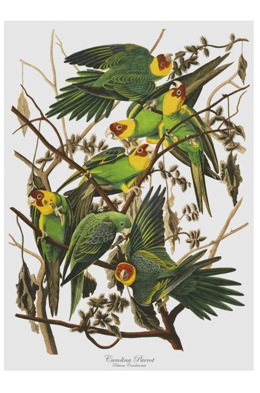 Cubic Birds Tea Towel- Parrot