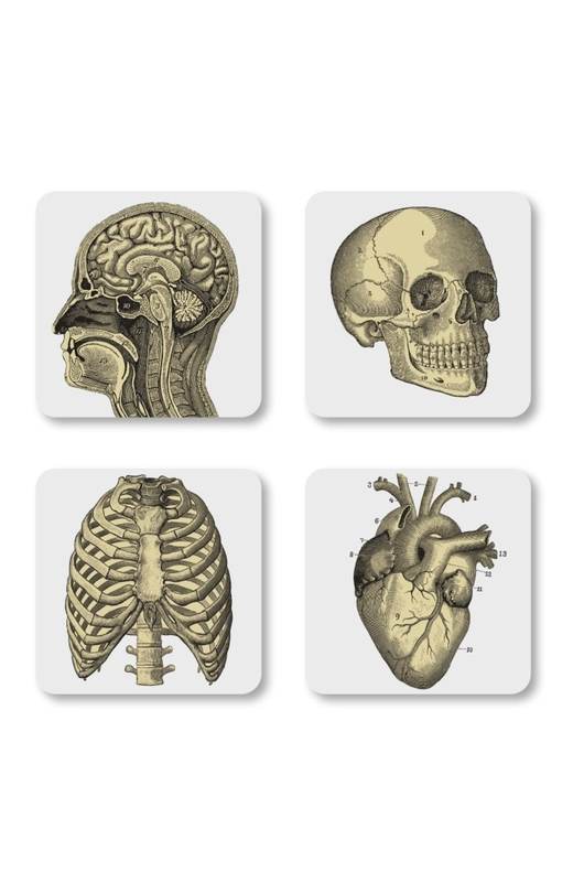 Cubic Curios Coasters Biology 4